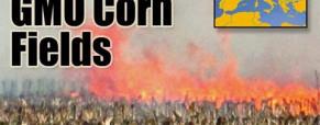 Hungary Destroys All Monsanto GMO Corn Fields