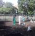 Ültető nap az Aranykatica kertben