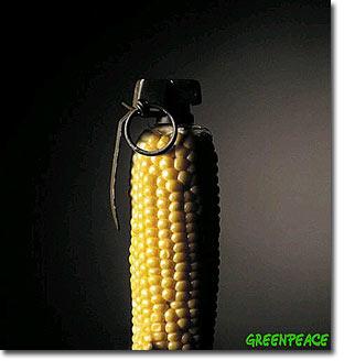 gmo-corn-grenade