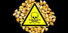 Tartsuk Monsantot távol kertünkből 5 egyszerű lépéssel