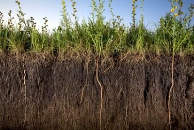Soil-roots