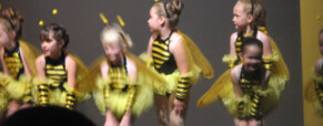Méhpusztulás világszerte