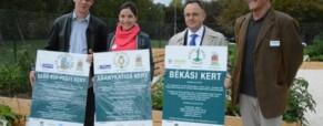 Cikk: Világháborús örökség terjed rohamosan Budapesten