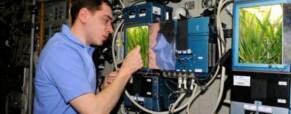 A NASA növényt fog termeszteni a Holdon