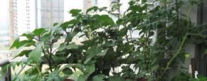 A kezdő balkonkertészek hat pontja