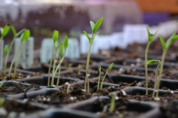 plants_window