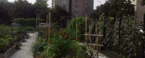 Megelevenedik a városi kertmozgalom