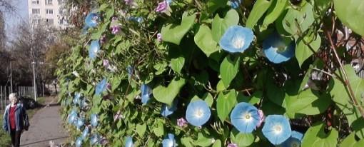 Szezonzáró az Aranykatica kertben