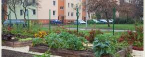 Még egy orosz cikk: Огород в большом городе: по-венгерски