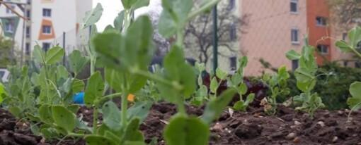 Képek a városi kertekről a karantén idején